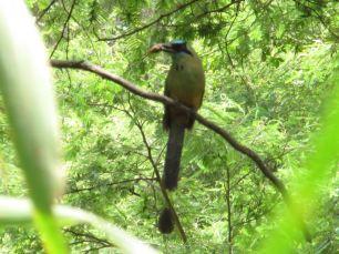 P N Podocarpus / Zamora / Ecuador
