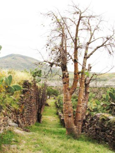 Ayacucho. Perú