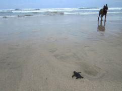 Playa Guiones / Guanacaste